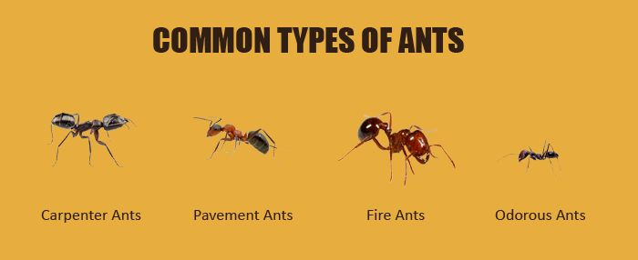 5 Natural & Effective Ways to Instantly Kill Ants