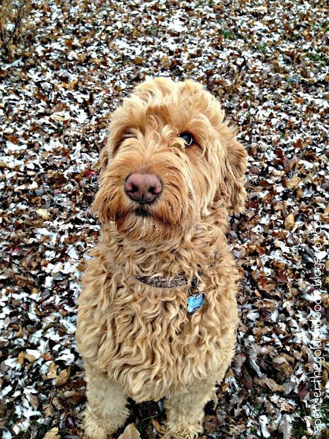 Pets for Sale and Adoption | Oodle Classifieds