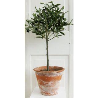 olivträd - istället för gästbok