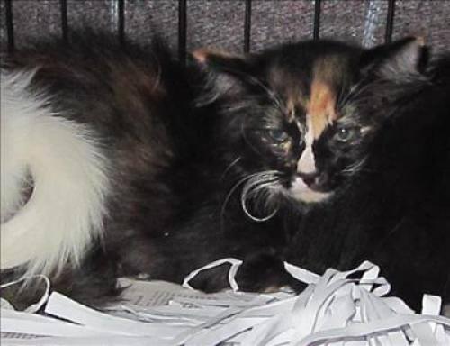 Cat Rescue Dallas Ga