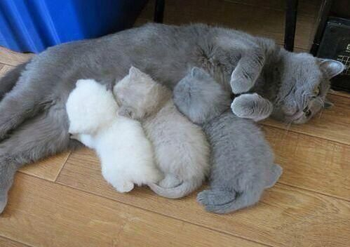 Too adorable for words! Mama cat and 3 fluffball kittens - love the tints