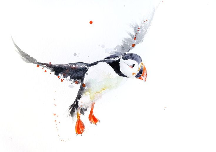 JEN BUCKLEY signed LIMITED EDITON PRINT of my original Puffin watercolour …