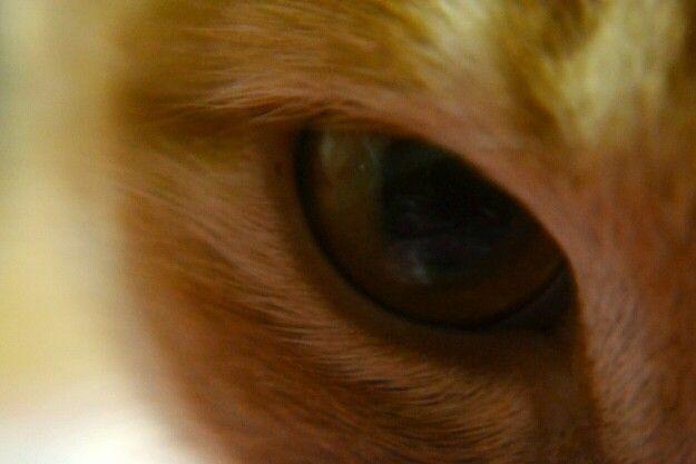 Macro and animal photography. Cat