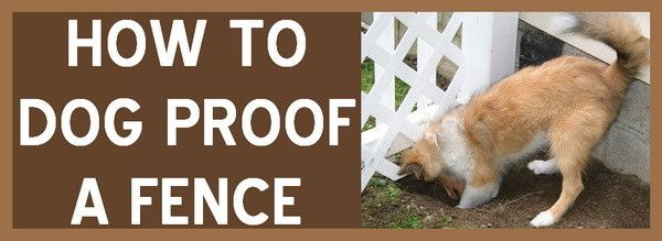 17 Best Ideas About Dog Proof Fence On Pinterest