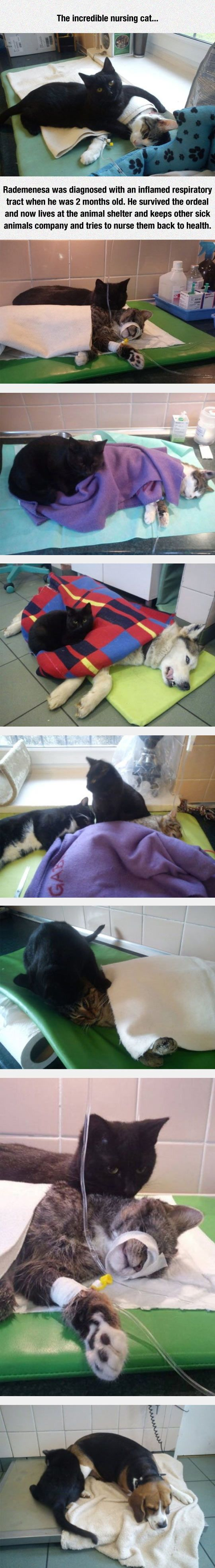 This black cat, Rademenesa, lives in an animal shelter .  He keeps sick cats company and tries to nurse them back to health.  Beautiful!