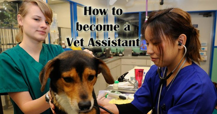 How to become a Veterinary Assistant