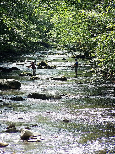 Fly fishing elkmont smoky mtn tennessee amazing world for Tennessee trout fishing