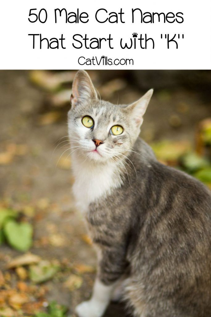 100 Cute Cat Names That Start With K Catvills Cute Cat Names Cat Names Girl Cat Names