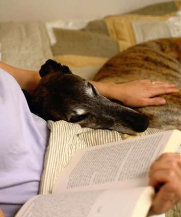Greyhound makes the Top 10 Family Friendly Dogs:  For families busy tending to newborns, Akner suggests adopting a dog that doesn't necessarily need a... - Ryan McVay