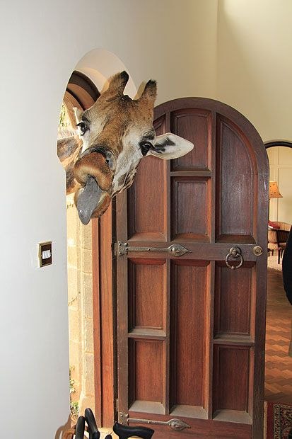... a rude intruder at a house in Namibia. Michael Giele