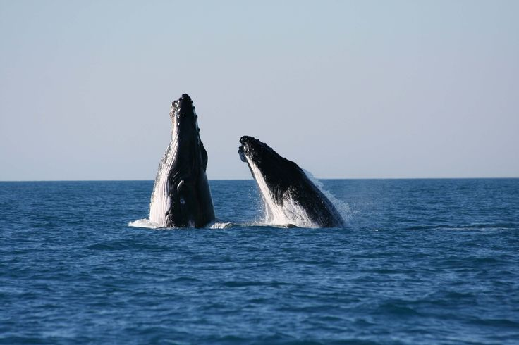 Go whale watching in Perth or Fremantle