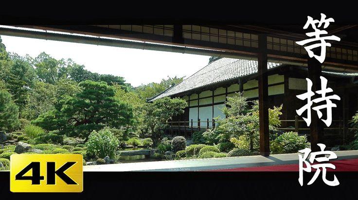 等持院 [4K] 京都の庭園 Toji-in Temple [4K] The Garden of Kyoto Japan