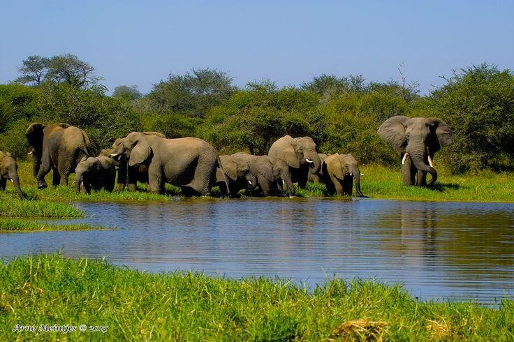 https://flic.kr/p/w3WCH8 | IMG06233fb | African bush elephant