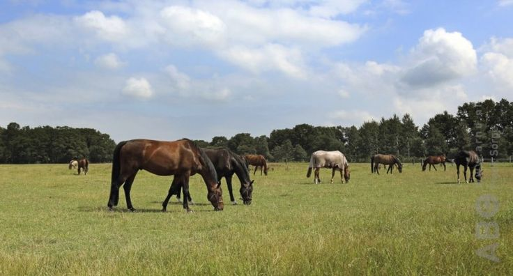 Paarden die in een verrijkte omgeving leven ontwikkelen betere persoonlijkheden, laten een grotere leervaardigheid zien en voelen zich beter. Dat blijkt uit Frans onderzoek.