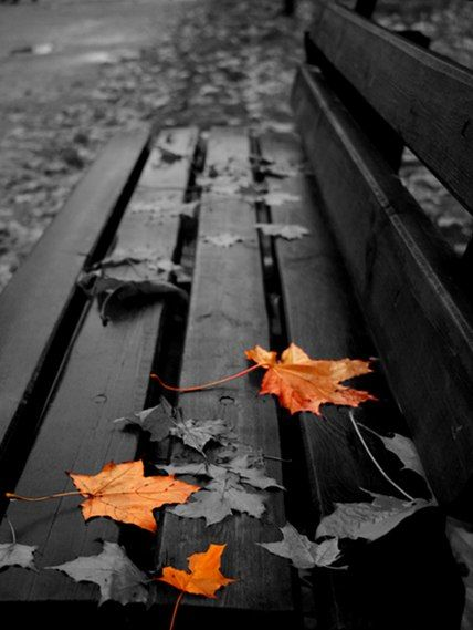 Park bench with orange leaves black white with color art
