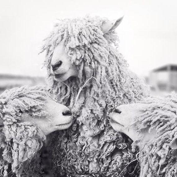 Sheep Art, Animal Photography, Sheep Photograph, Animal Art Print, Black & White Photography Print,