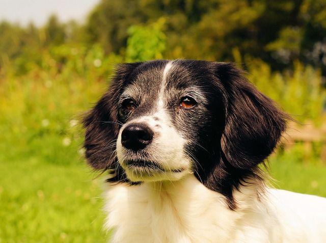 Nombres para perros machos originales http://www.zocopet.es/blog/nombres-de-perros-machos-originales-y-bonitos/