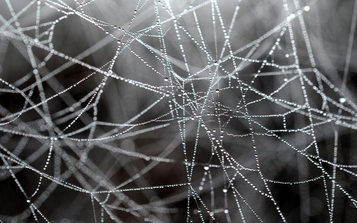 El rocío de la mañana cuelga sobre una tela de araña, en Seeburg, Alemania occidental.- JULIAN STRATENSCHULTE (AFP)