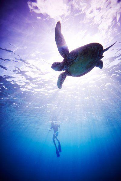 Life underwater. By Sandy Nicholson