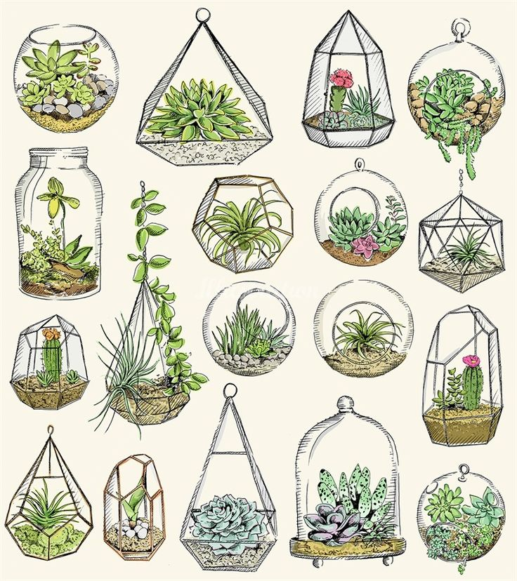 Pin by Viktoriia on Plant in 2019 Drawings, Cactus art