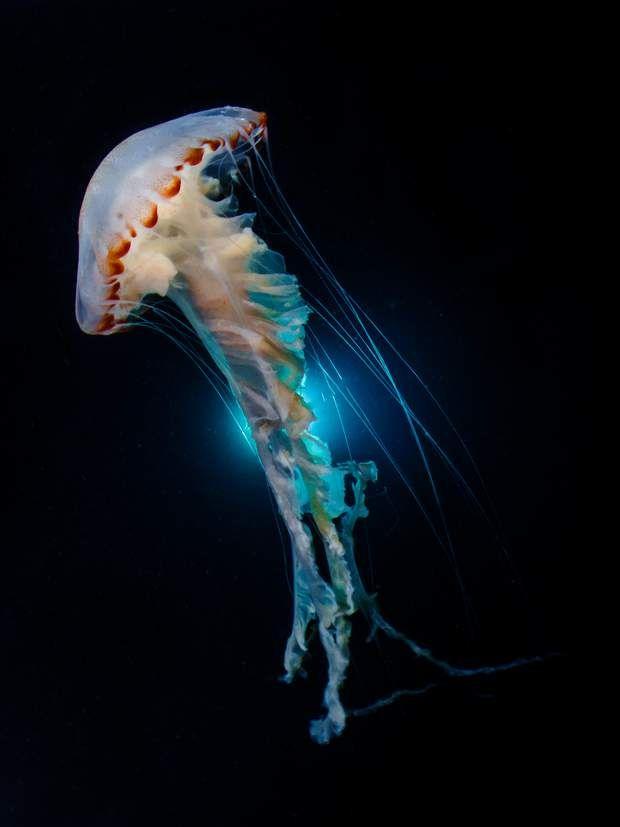 Les plus belles photos sous-marines récompensées par Ocean Art en 2018 en  2020 (avec images) | Animaux sous-marins, Photos sous-marines, Photos de  l'océan