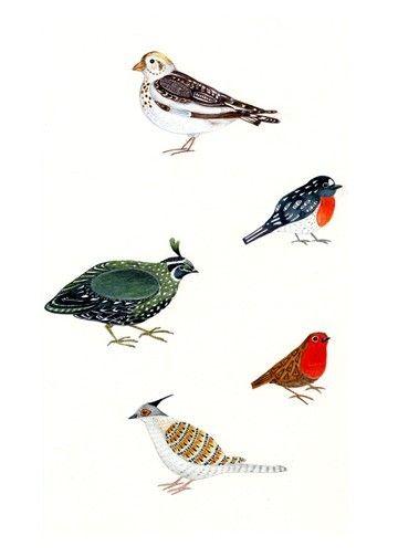 Bird art print bird illustration print 8x11 by ChasingtheCrayon, $17.00
