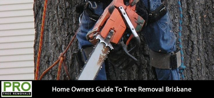 Brisbane City Council Tree Removal Laws
