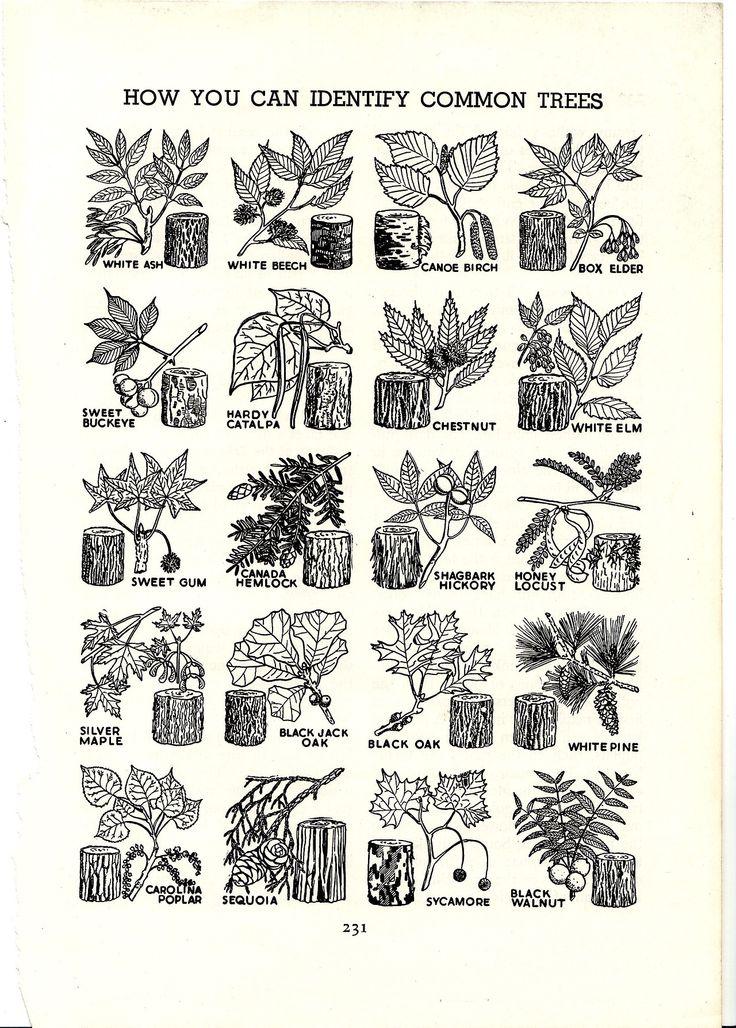 How to Identify Common Trees.