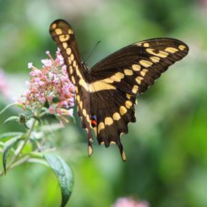 Find This Pin And More On Butterfly Patio Garden.