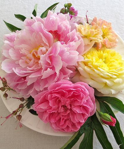 Peony with roses | A scented tablecentre, with roses, gerani… | Flickr