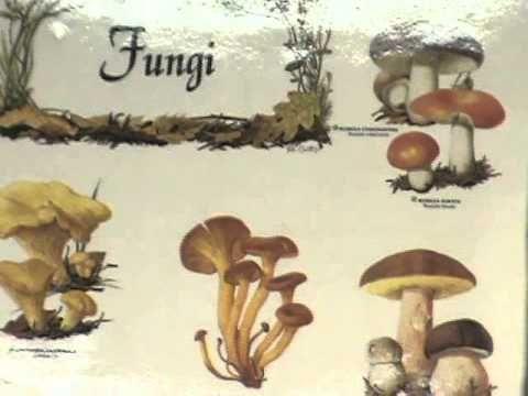 (2013) Sesión 3. De las levaduras a los hongos, un camino sinuoso
