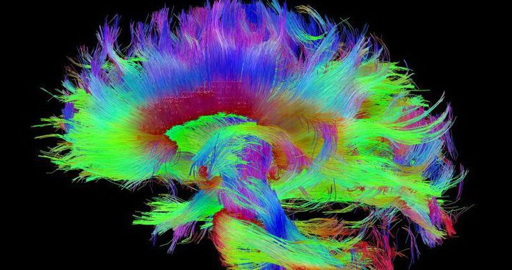 Harvard researchers think they've discovered the physical seat of human awareness.