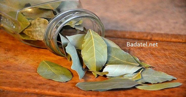 Nechajte zhorieť bobkový list a uvidíte, čo sa bude diať do 10 minút