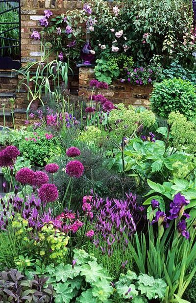Alliums, irises, lavender, alchemilla mollis, heuchera and clematis  I know you don't like strappy leaves, so ignore the iris. Good color combo, though