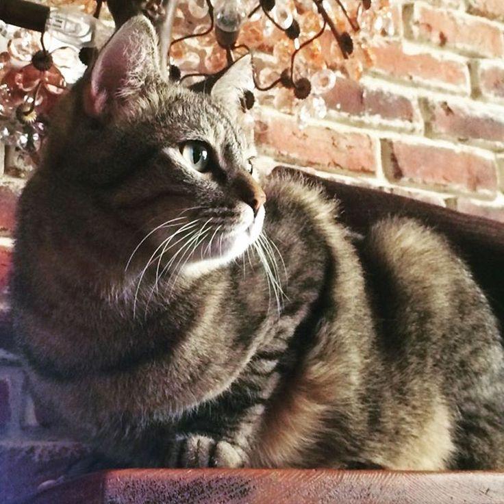 Mine love...  #superCookie #micetti #micetto #micettino #micettidolci #houseanimal #cat #sweetcat #lovingcat
