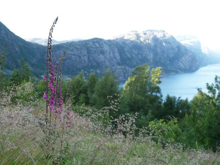 Høllesli, Lysefjorden. June 14th 2014