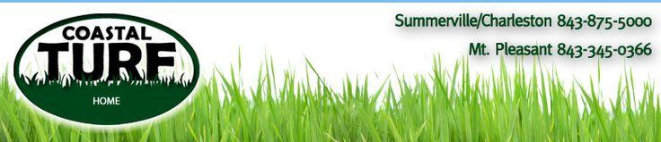 Lawn Fertilization, mole cricket, fungus control, sod installation, tree/shrub care