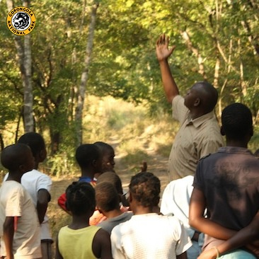 At Gorongosa, we understand that the children who live near the Park are our future conservationists. Our education staff brings  local kids to our Conservation Education Center to teach them about the importance of their conserving their national park, and their planet. These bright, eager young kids, are Gorongosa's future protectors and we thank them for their passion and enthusiasm!    Learn more about Gorongosa's education programs: …