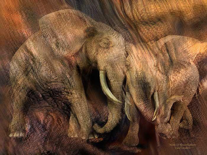 Moods Of Africa Elephant