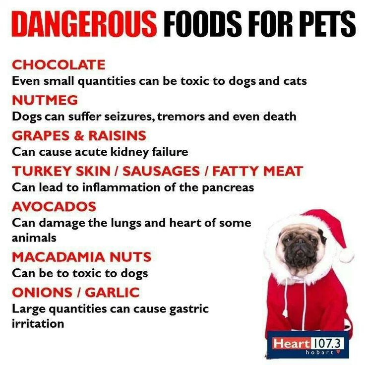 What Foods Not To Give Dogs