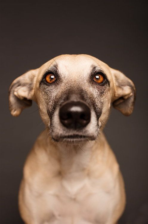 Biometric passport picture by Elke Vogelsang