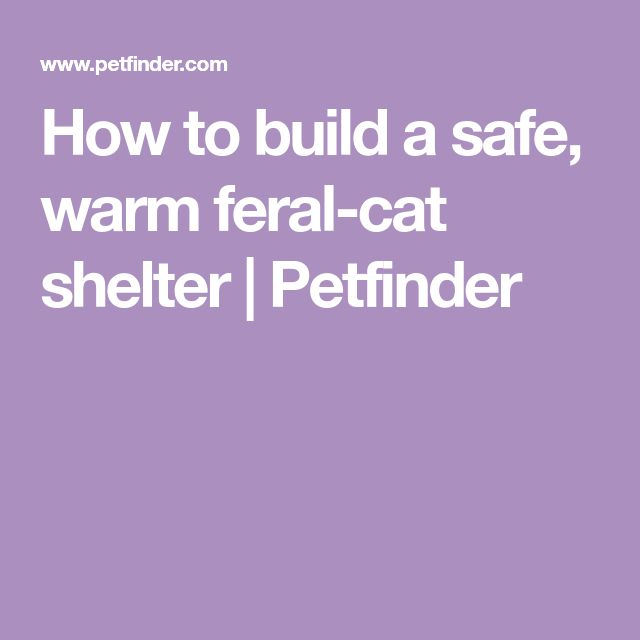how to build a stray cat shelter