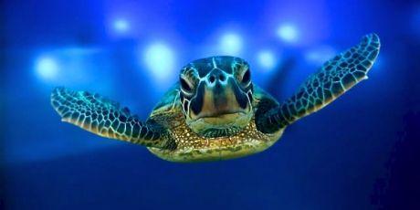 Avaaz - ¡Una reserva marina del tamaño de México!