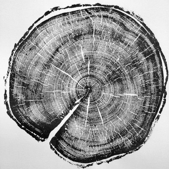 Old Growth Pine. Original Print. 100+ years old pine from Little Cottonwood Canyon. Woodcut print