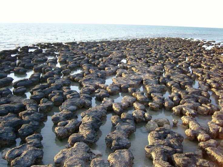 Shark Bay, stromatolites