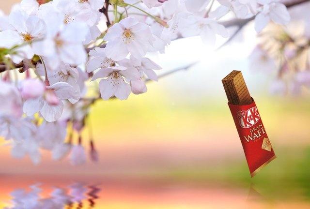 GRAN WAFER グランウェファー/Kit Kat(ネスレ日本 キットカット)桜 sakura