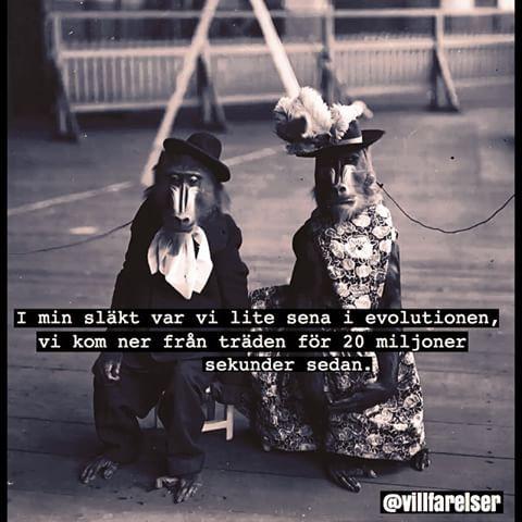 #evolution #apa #apor #primat #villfarelser #humor #ironi #text #foto