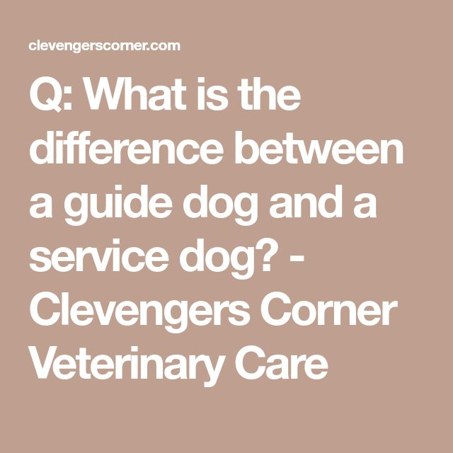 Q: What is the difference between a guide dog and a service dog? - Clevengers Corner Veterinary Care