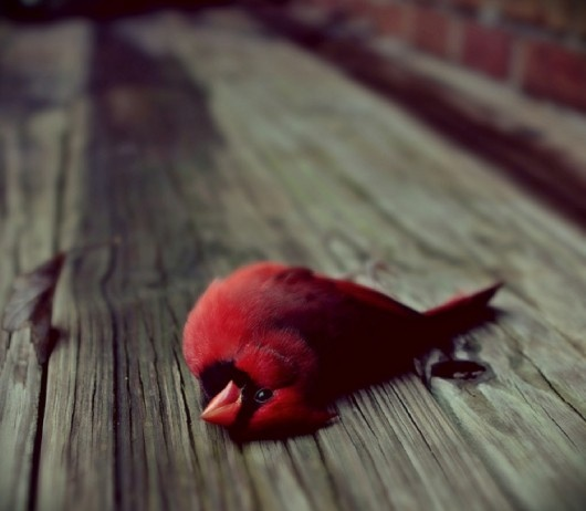 B F Fa Ef F Ab A F C Wildlife Photography Random Pictures as well Colorful Birds besides Christmasp Picture Karacsonyi Kep additionally When A Cardinal Appears In Your Yard Art in addition Cardinal Tattoo Sleeves. on beautiful cardinal bird