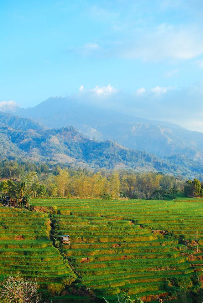 Relaxing in Mountainous Malino, South Sulawesi